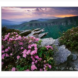 SL0149: Carolina Rhododendron atop Hawksbill Mountain at Sunset,