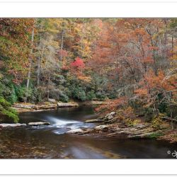 AD0500: Autumn foliage along the Chattooga National Wild and Sce
