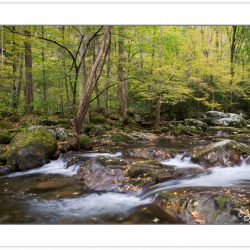 AD0285: Big Creek, Great Smoky Mountains National Park, TN, Autu