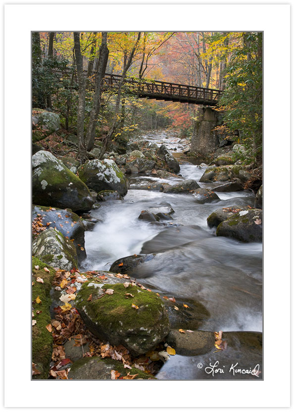 AD0378: Foot bridge over Lynn Camp Prong, Great Smoky Mountains