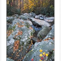AD0383: West Prong Little Pigeon River above the Chimney's Picni