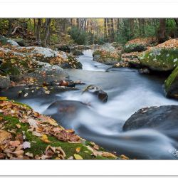 AD0389: Fall foliage on Lynn Camp Prong, Great Smoky Mountains N