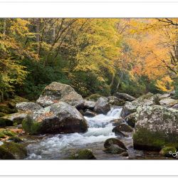 AD0711: Big Creek, Great Smoky Mountains National Park, TN