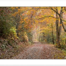AD0790: Noland Creek Trail in fall foliage, Great Smoky Mountain