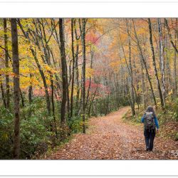 AD0796: Hiker on Noland Creek Trail in fall foliage, Great Smoky