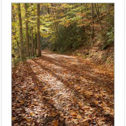 AD0797: Noland Creek Trail in fall foliage, Great Smoky Mountain