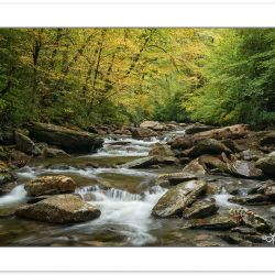 AD0824: Walker Camp Prong, Great Smoky Mountains National Park,