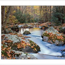 AL0238: Fall foliage on Lynn Camp Prong, Great Smoky Mountains N