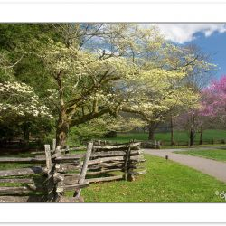 RD0104: Split rail fence, dogwoods, and redbuds along pedestrian
