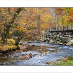 RD0132: Deep Creek, Great Smoky Mountains National Park, NC, Aut