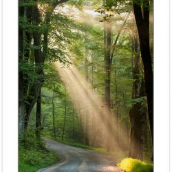 RD0155: Crepuscular rays on Ramsey Prong Road, Greenbrier, Great