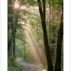 RD0161: Crepuscular rays on Ramsey Prong Road, Greenbrier, Great