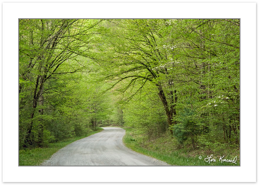 SD0191: Gravel Road through Spring Forest,Tremont area, Great Sm