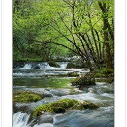 SD0896: Middle Prong Little River, Great Smoky Mountains Nationa