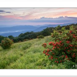 SD1021: Flame azalea on Gregory Bald with Cades Cove in the dist