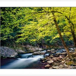 SL0132:  Backlit Trees along Middle Prong of the Little River, G