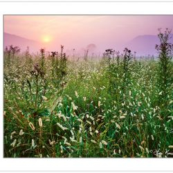 SL0309: Cades Cove meadow at sunrise, Great Smoky Mountains Nati