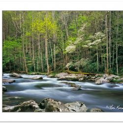 SL0342: Middle Prong of the Little River, Great Smoky Mountains
