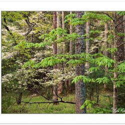 SL0402: Hardwood forest with Flowering Dogwood (Cornus florida),
