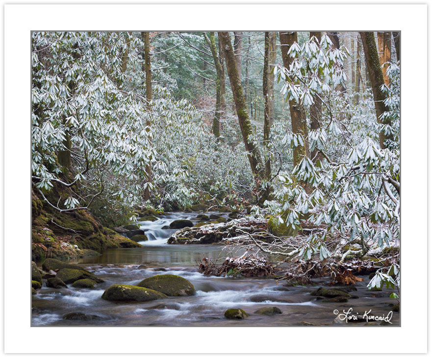 Anthony Creek, Great Smoky Mountains National Park, TN, winter