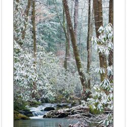 WD0362: Anthony Creek, Great Smoky Mountains National Park, TN,