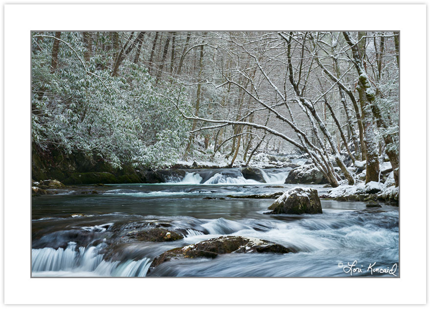 WD0363: Middle Prong Little River in winter, Great Smoky Mountai