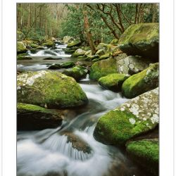 WL0151: Cosby Creek, Great Smoky Mountains National Park, TN, wi