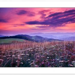 A00102:  Max Patch in Pisgah National Forest, North Carolina, su