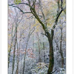 AD0211: Autmn foliage covered in light snow, Pisgah National For