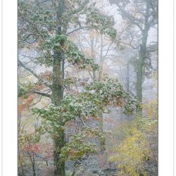AD0213: Autmn foliage covered in light snow, Pisgah National For
