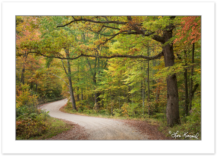 AD0585: Early Autumn foliage on Max Patch Rd, Pisgah National Fo