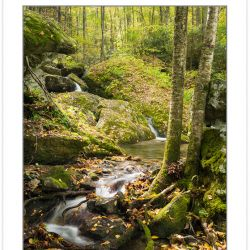 AD0850: Cascade on Shanty Spring Branch, Grandfather Mountain St
