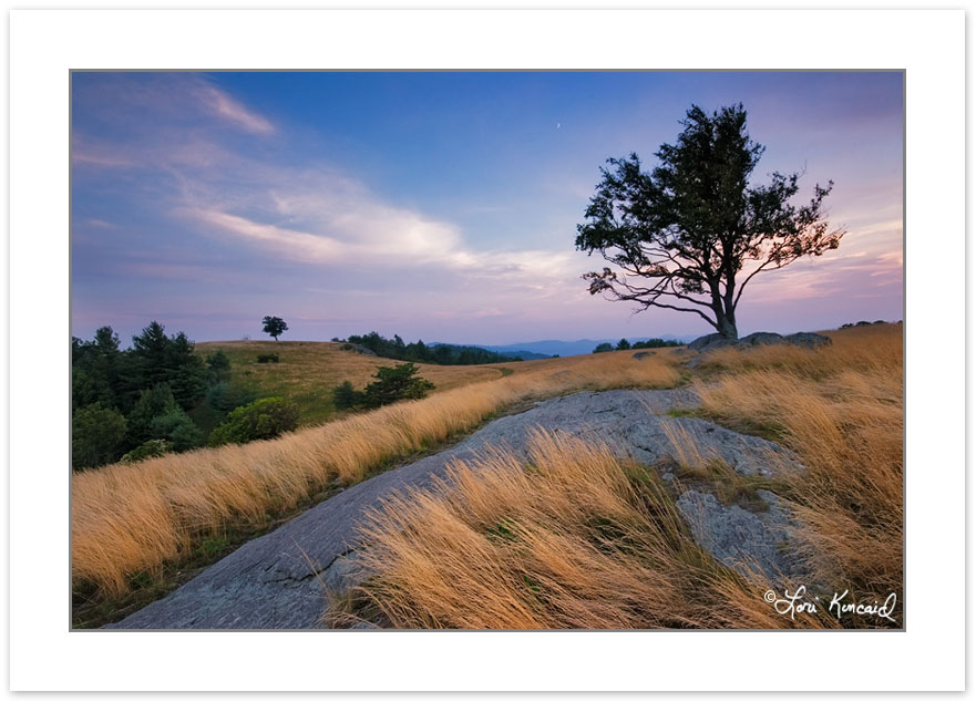 SL0278: Lone Trees in meadows of Doughton Park at sunset, Blue R
