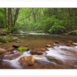 SD0194: Fires Creek, Nantahala National Forest, Clay County, NC