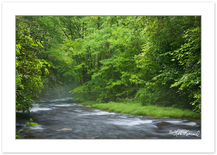 SD0198: Fires Creek, Nantahala National Forest, Clay County, NC,