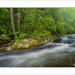 SD0199: Fires Creek, Nantahala National Forest, Clay County, NC