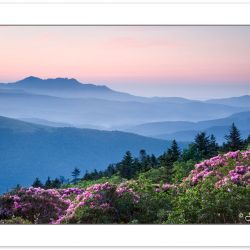 SD0379: View of Grandfather Mountain and Catawba Rhododendron at