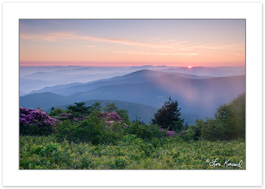 SD0381: Catawba Rhododendron on Grassy Ridge at sunrise, Roan Hi