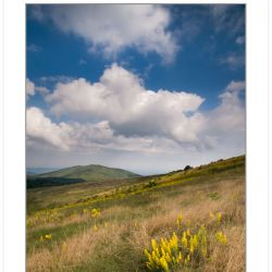 Clearing storm over Roan Mountain Goldenrod on Max Patch Mountai