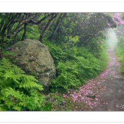 Hiking Trail at Craggy Gardens, Blue Ridge Parkway, NC, late spr