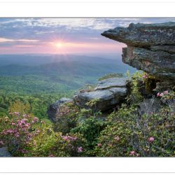 Carolina Rhododendron at sunrise, Linville Gorge Wilderness, Nor
