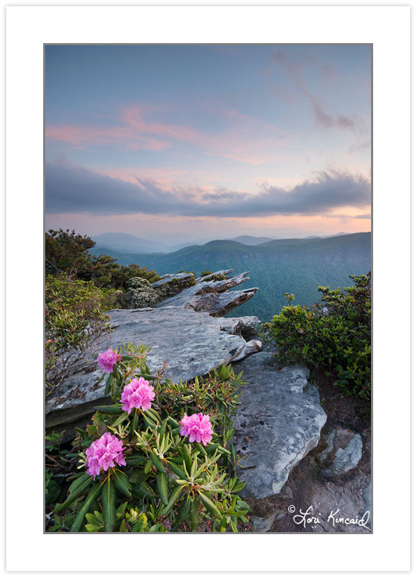 SD0911: Carolina Rhododendron at Sunset, Linville Gorge Wilderne