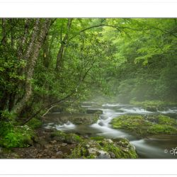 Mist rising off the Oconaluftee River, Great Smoky Mountains Nat
