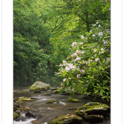 Great Smoky Mountains National Park, TN, Spring