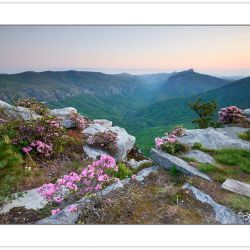 SD0998: Carolina Rhododendron on Shortoff Mountain at sunrise, L