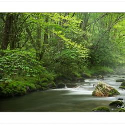 Bradley Fork of the Oconoluftee River, Great Smoky Mountains Nat
