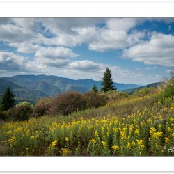 SD1086: Goldenrod in a grassy meadow, Middle prong Wilderness, N