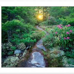 SL0101: Wilderness Trail through Natural Garden  Nantahala Natio