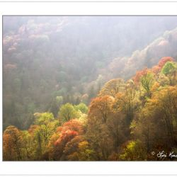 SL0349: Early spring foliage on the Blue Ridge Parkway in cleari