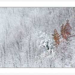 WD0231: Heavy snow blankets the forest in October, Pisgah Nation